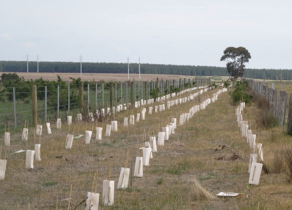 2L Cardboard Carton Tree Guards | Moorabool Catchment Landcare Group