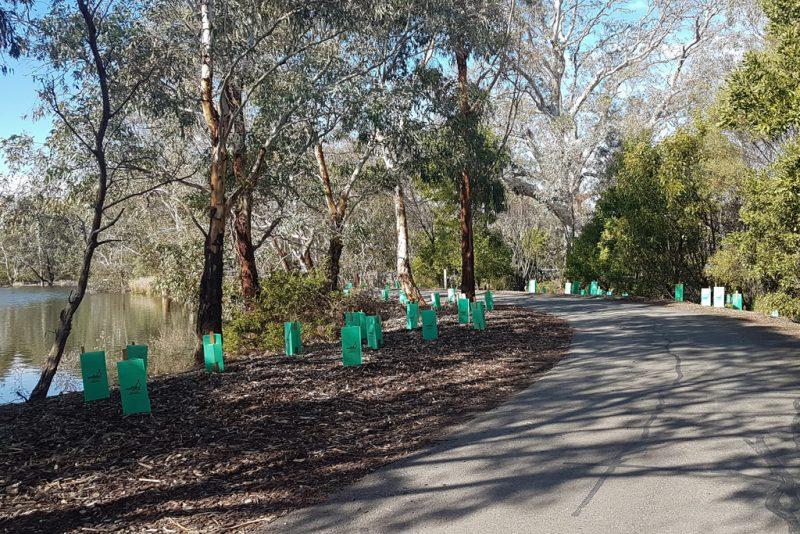 National Tree Day 2018 - Laratina Wetlands - Photo 1