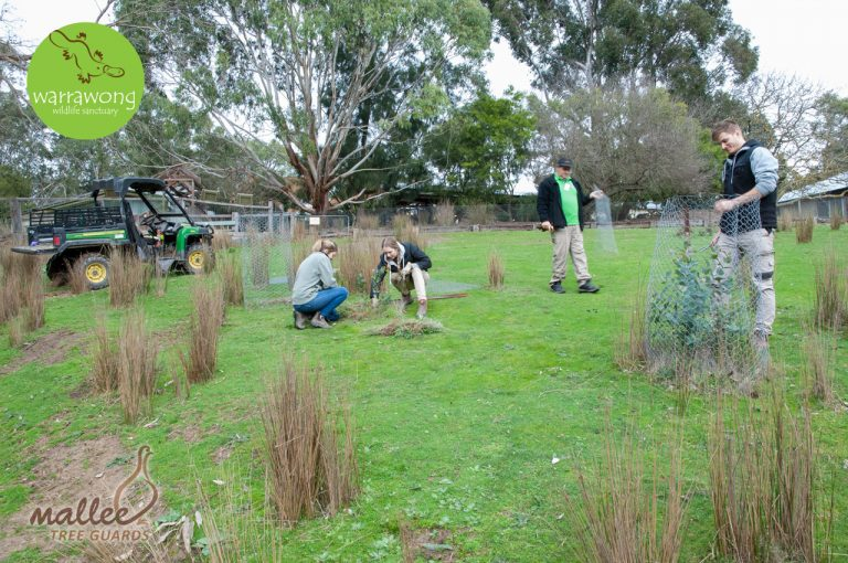 Warrawong Volunteers Removing the old Tree Guards