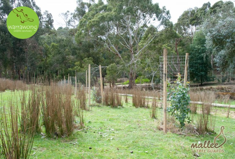 Mallee Mesh Tree Guards Installed at Warrawong Wildlife Sanctuary