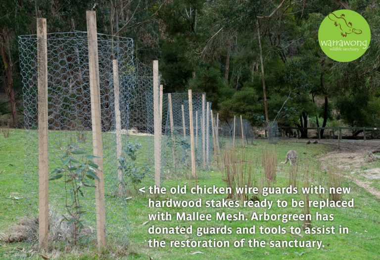 The existing chicken wire guards set to be replaced at Warrawong