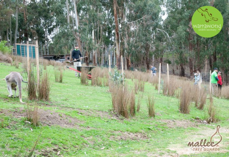 First stage of Mallee Mesh Tree Guards installed at Warrawong