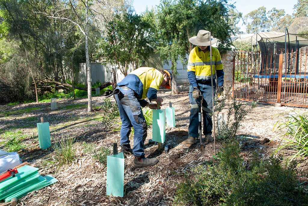 Mount Barker Council Planting - 30 August 2019